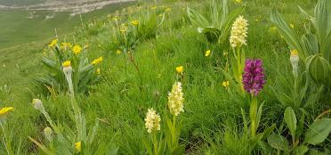 Hiking in Abruzzo - wild orchids