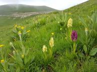 Hiking in Abruzzo - wild orchids